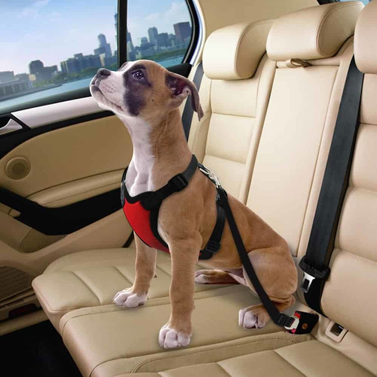 Pet Car Tether